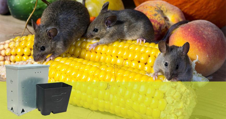 imagen-destacada-roedores