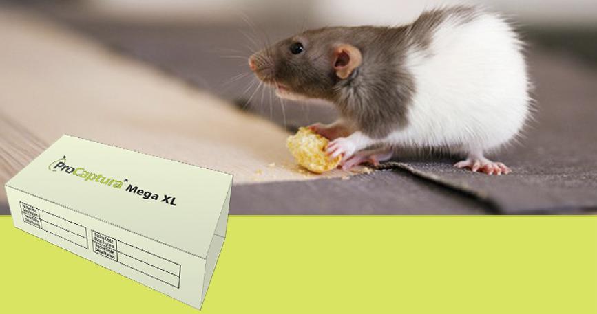 trampa captura roedores ProCaptura de ProControl